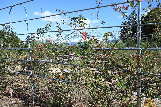 IMG_8671安曇野バラのお庭