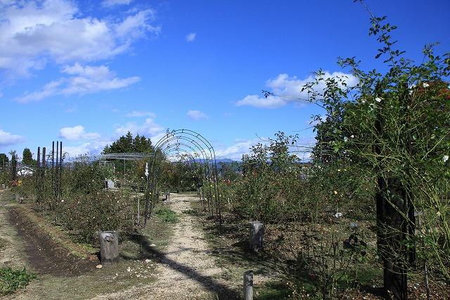 IMG_8685安曇野バラのお庭