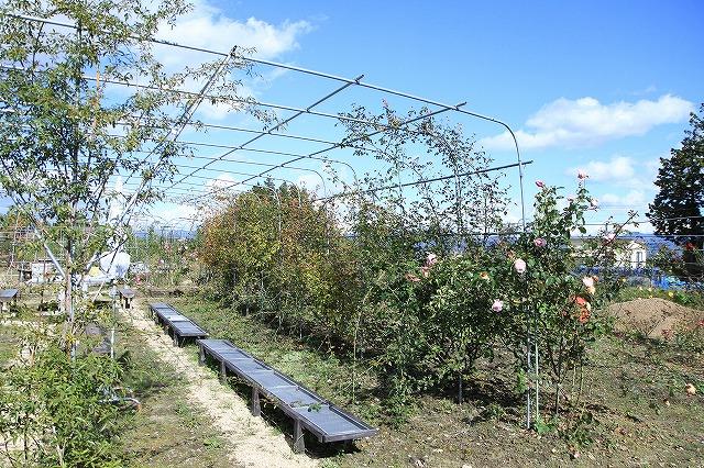 IMG_8687安曇野バラのお庭