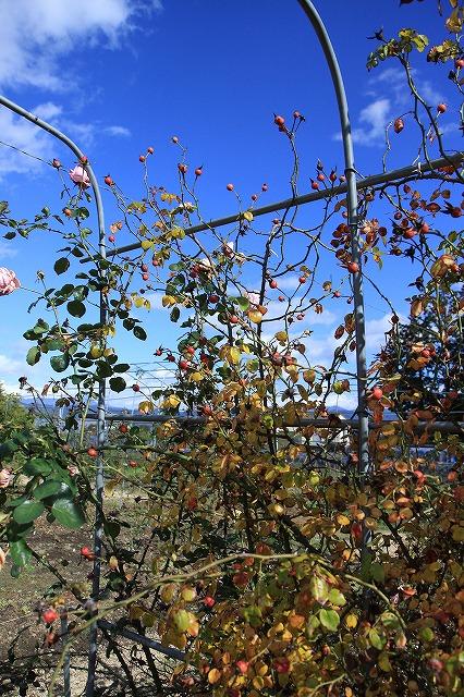 IMG_8707安曇野バラのお庭