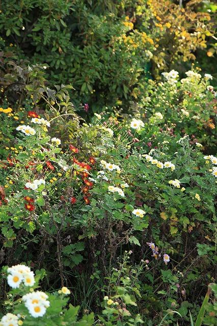 IMG_8328実家の庭