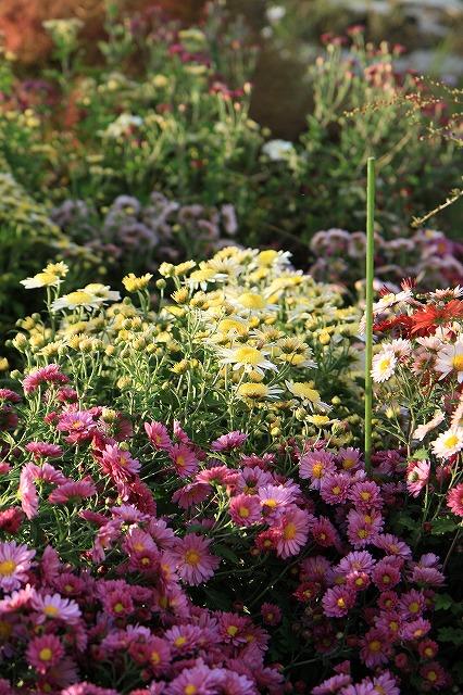 IMG_8338実家の庭