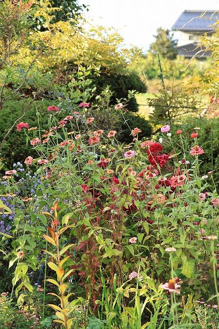 IMG_8322実家の庭
