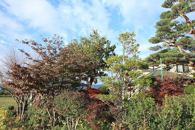 IMG_8441実家の庭