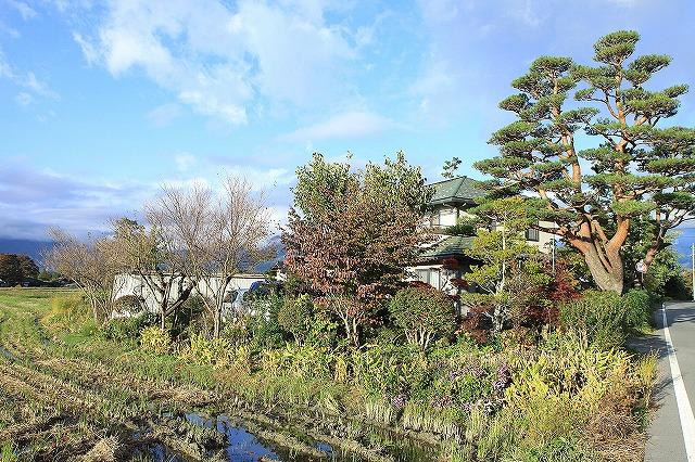 IMG_8450実家の庭