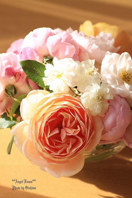 IMG_9620乙姫ガーデンのバラ達