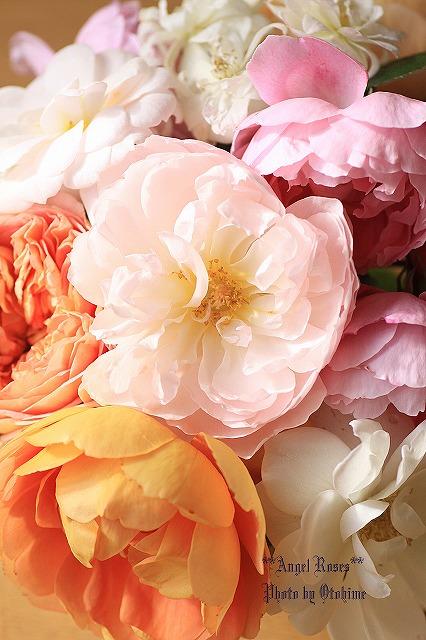 IMG_9640乙姫ガーデンのバラ達