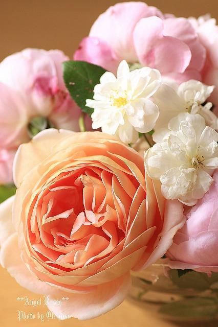 IMG_9665乙姫ガーデンのバラ達