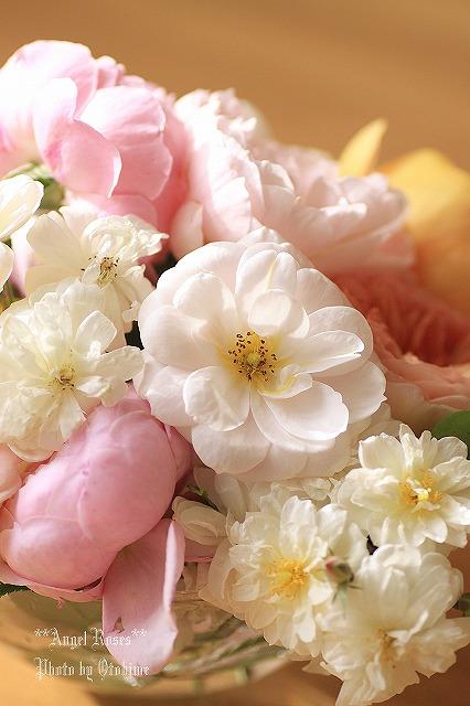 IMG_9670乙姫ガーデンのバラ達