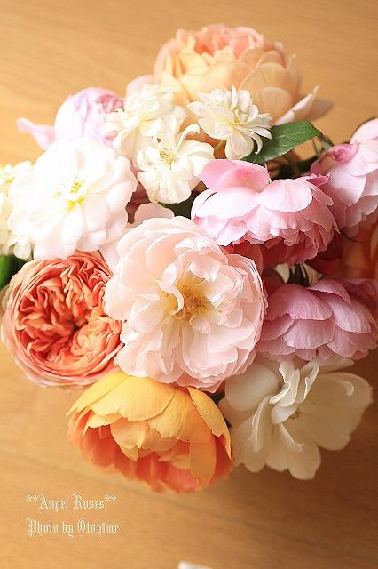 IMG_9700乙姫ガーデンのバラ達