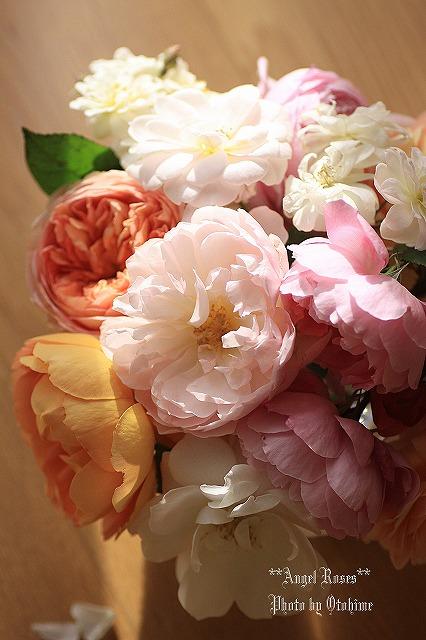 IMG_9715乙姫ガーデンのバラ達