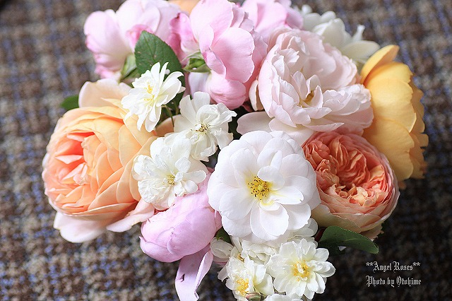 IMG_9736乙姫ガーデンのバラ達