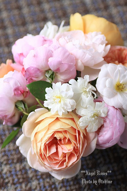 IMG_9745乙姫ガーデンのバラ達