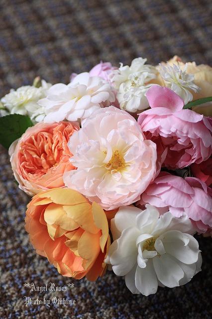 IMG_9760乙姫ガーデンのバラ達