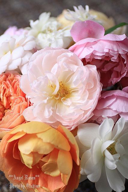 IMG_9764乙姫ガーデンのバラ達