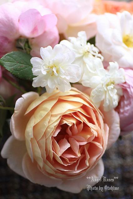 IMG_9794乙姫ガーデンのバラ達