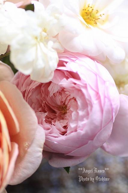 IMG_9804乙姫ガーデンのバラ達
