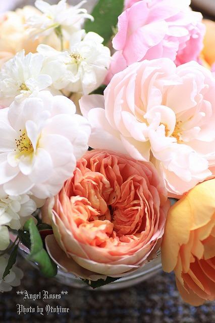 IMG_9809乙姫ガーデンのバラ達