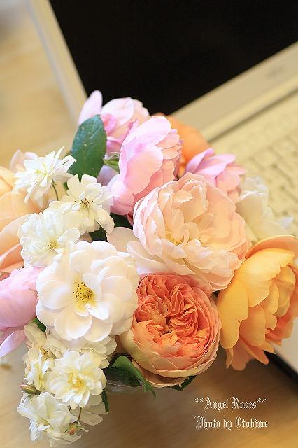 IMG_9829乙姫ガーデンのバラ達