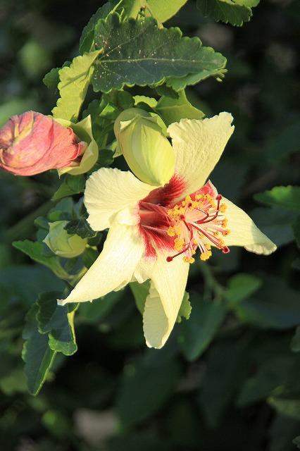 IMG_0250さくやこの花館