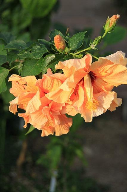 IMG_0254さくやこの花館