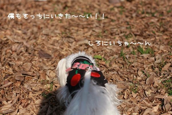 012_20100115212405.jpg
