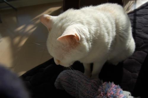 20091119_02変な靴下