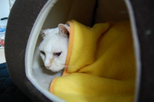 20091124_05寒いです