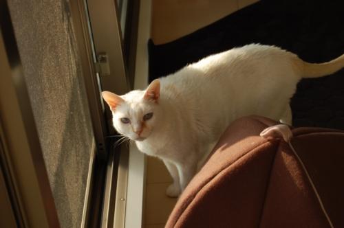 20091125_06姉さん