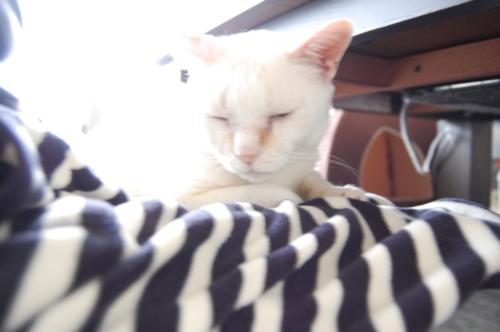 20091130_03ゴワゴワ