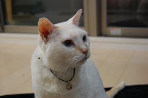 20100115_04白猫王子