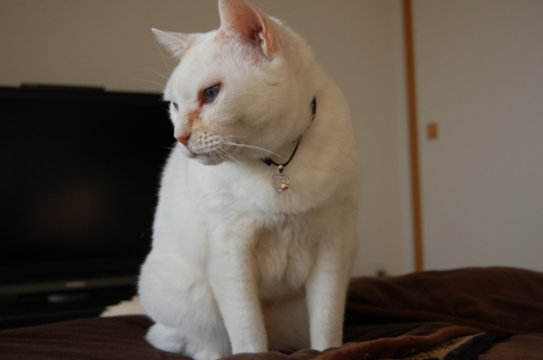 20100115_02飼い猫