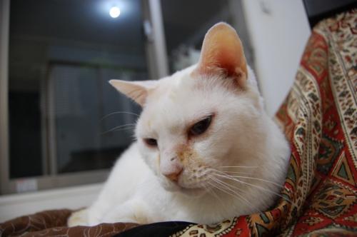 20100122_06三毛猫