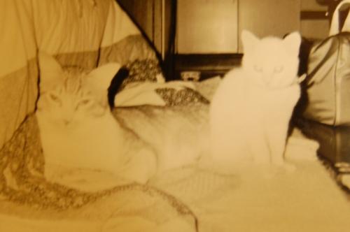 20100210_01子猫