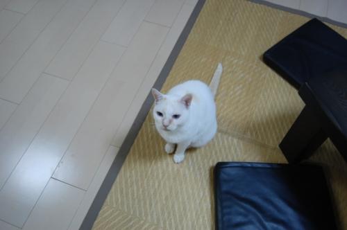20100511_02.jpg