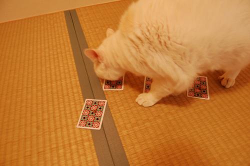 20101109_13tsukiさん01
