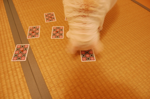 20101109_12mammyさん01