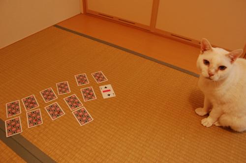 20101109_14ジンさん02