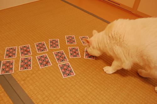 20101109_14ジンさん01