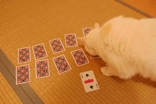 20101109_16タマの日和さん01