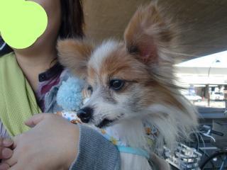 snap_shizukunkun_2009110213547.jpg