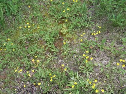 黄色い花は