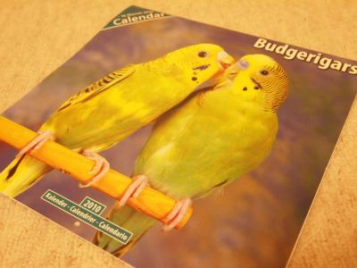 2010年鳥カレンダー