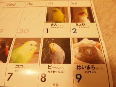 ピーちゃん10月8日
