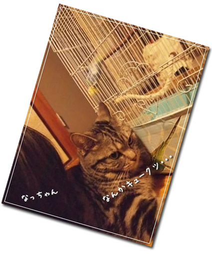 ピーちゃん床生活2コピー