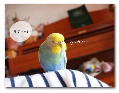 ウトウト記念日3