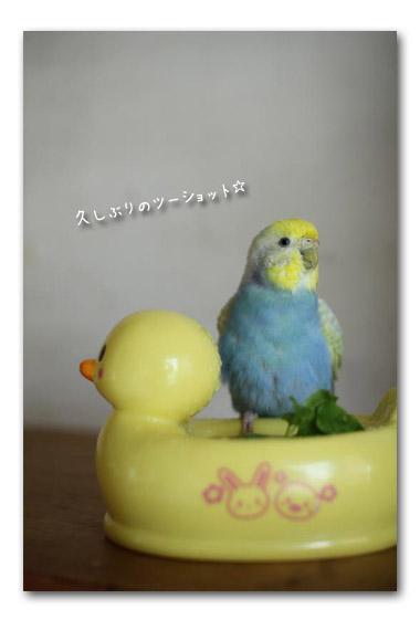 水浴び?2