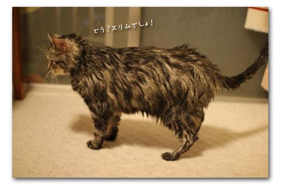 お風呂上がりチョコ2