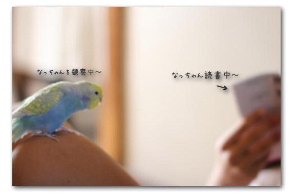○○の秋 なっちゃん読書