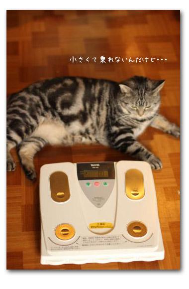 ○○の秋 チョコたん体重計1